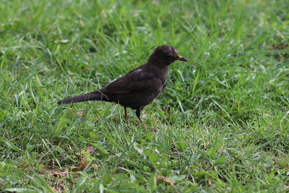 Vogel auf Wiese - Vogelfreundliche Gewächse