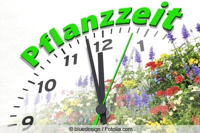 Grafik - Pflanzzeit-Uhr