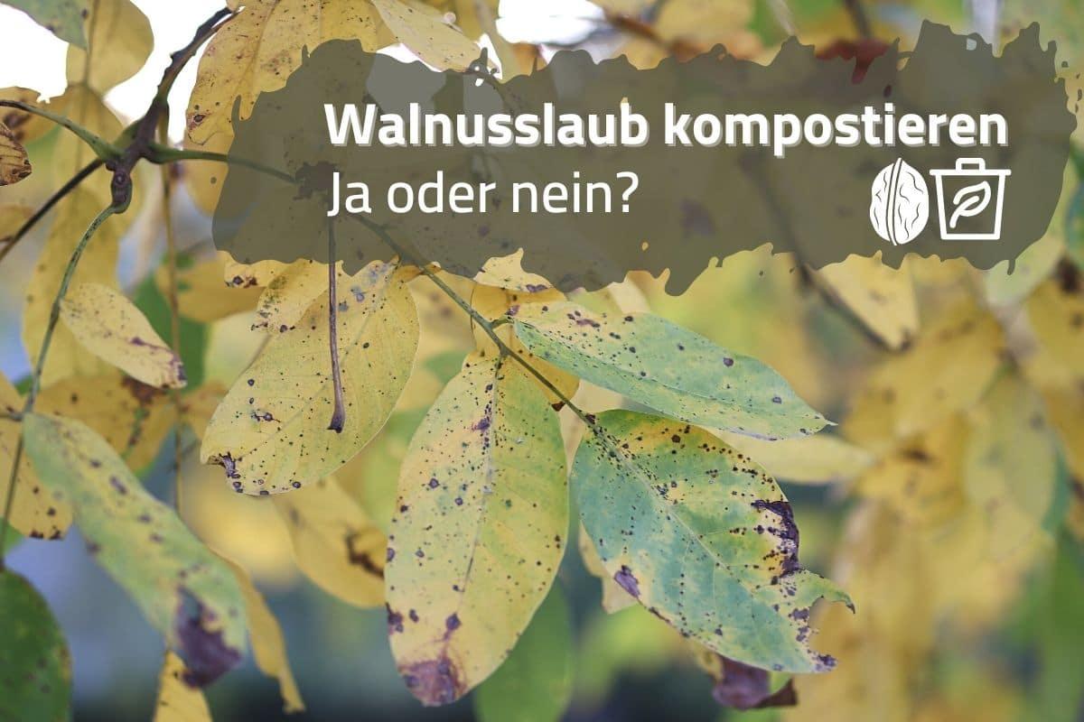 Walnusslaub kompostieren