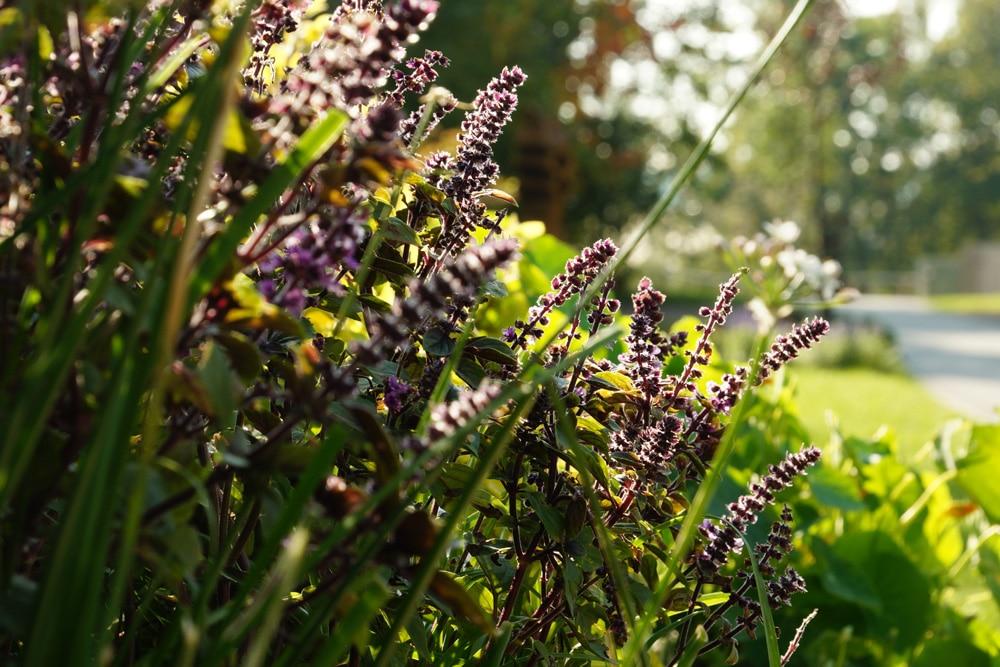 Hangbepflanzung: 25 Ideen einen Hang pflegeleicht zu ...