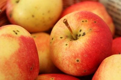 Apfelsorte Gala