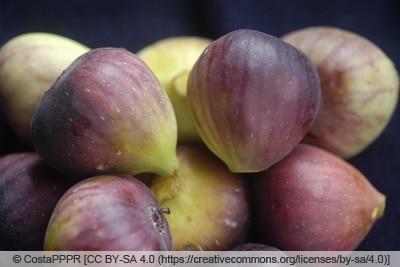 Früchte des Feigenbaums 'Brunswick'