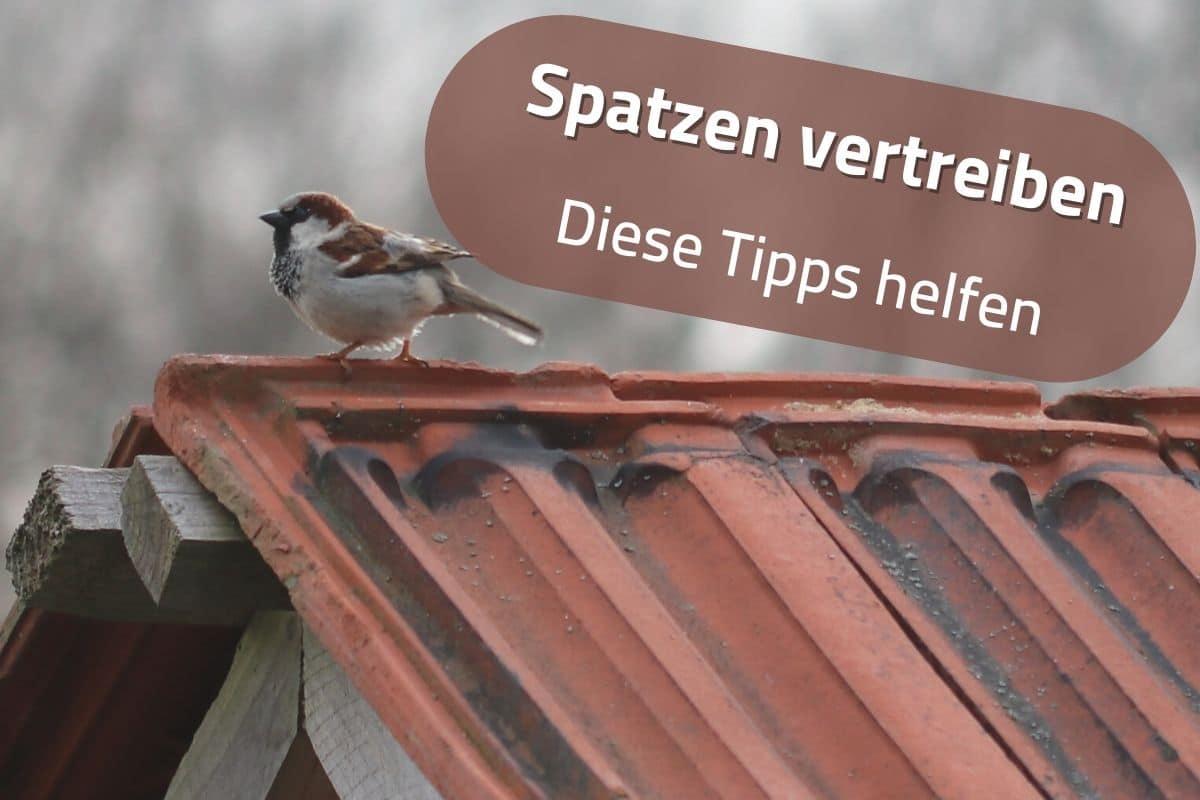 Spatzen vom Dach vertreiben - Spatz auf Dach