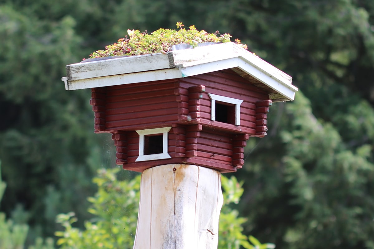Vogelhaus als Alternative