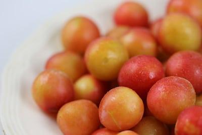 Mirabellen - Prunus domestica
