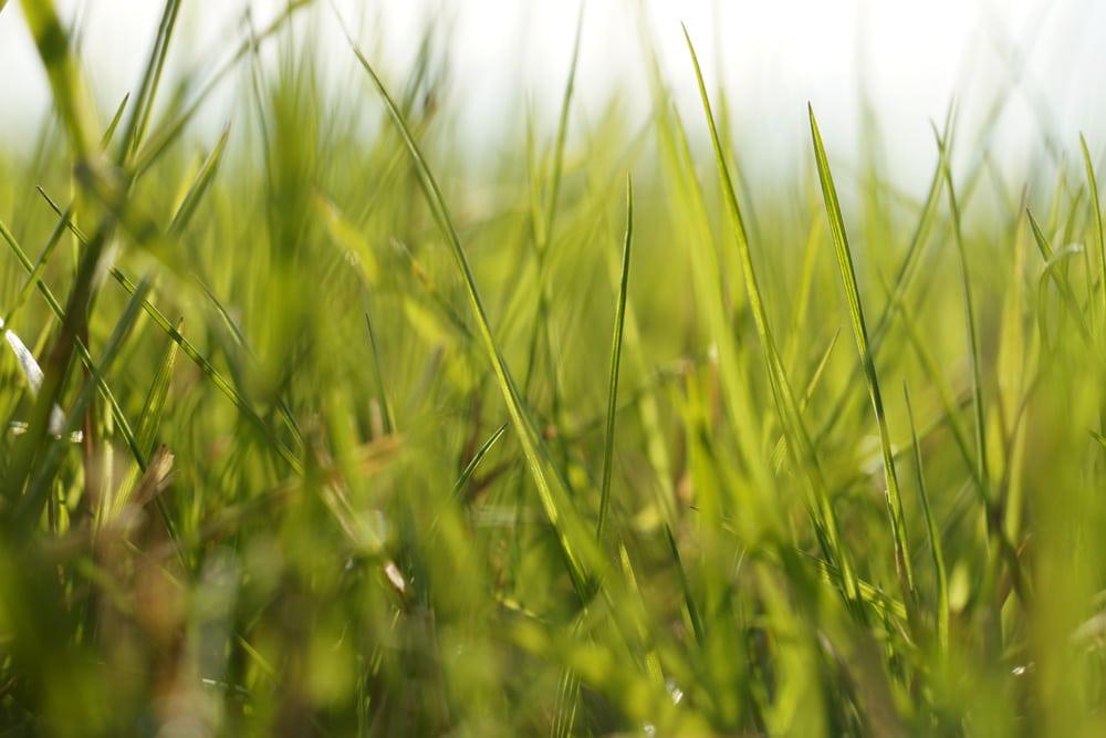 Rasen im Sonnenschein