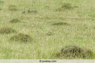 Ameisen umsiedeln - Ameisenhügel