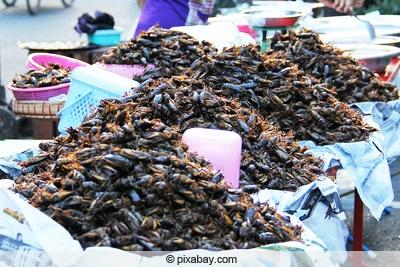 Kakerlaken als Nahrung