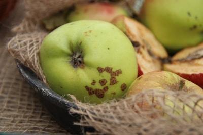 Apfelsorten Boikenapfel
