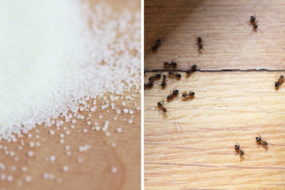 salz gegen ameisen wirkt es anleitung erfahrungen
