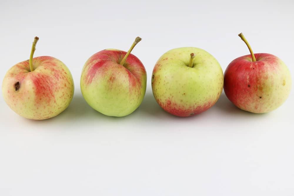 Sommeräpfel - Auguster
