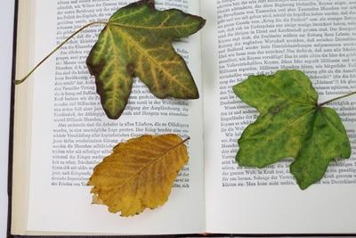 Blätter trocknen in Buch
