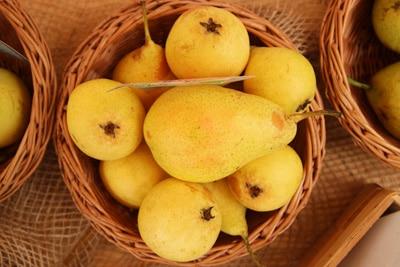Birnensorte 'Dessertnaja'