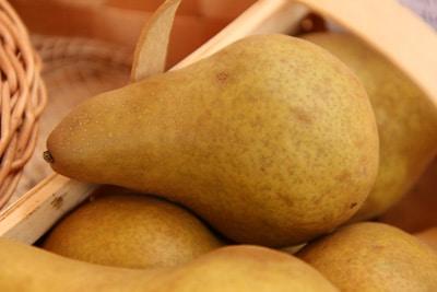 Birnensorte 'Gellerts Butterbirne'