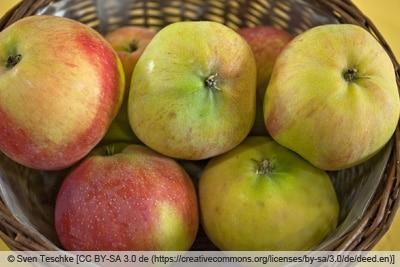 Sommeräpfel 'Jamba'