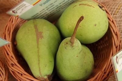 Birnensorte 'Pastorenbirne'
