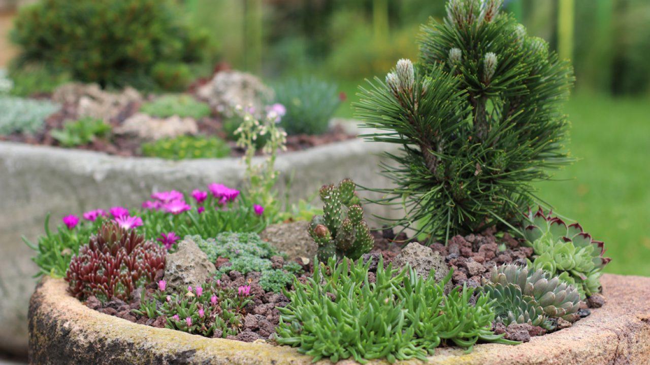 Pflanzsteine Pflanzringe Setzen Pflanzen Und Preise