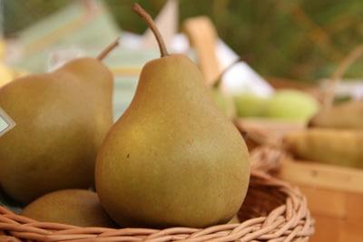 Birnensorte 'Uta'