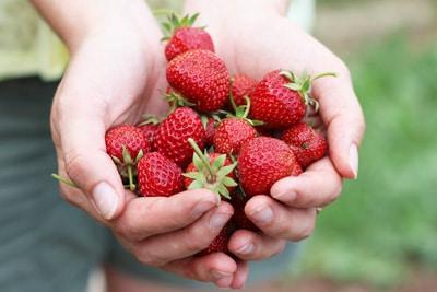 Hände voller Erdbeeren