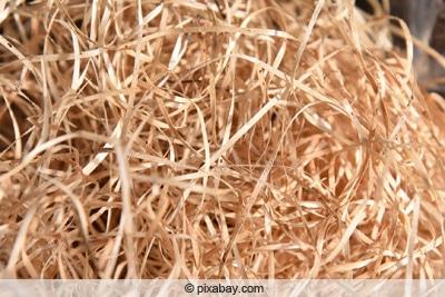 Kirschlorbeerblätter angefressen - Holzwolle