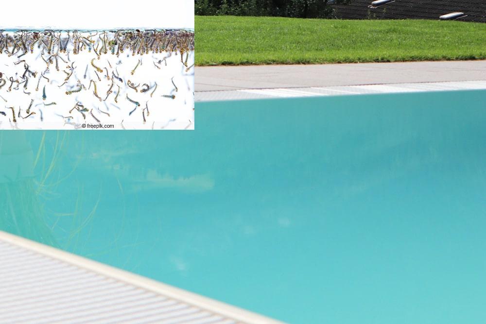 Larven im Pool