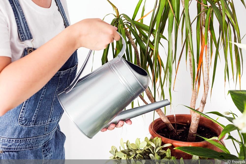 Pflanze übergossen