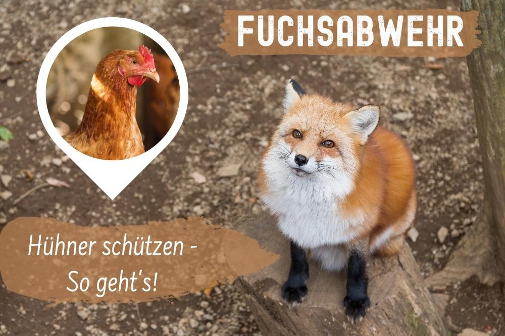Fuchsabwehr