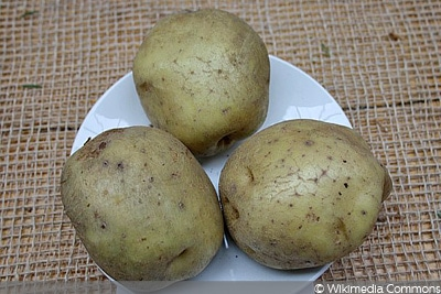 Kartoffelsorte Ackersegen, Kartoffeln