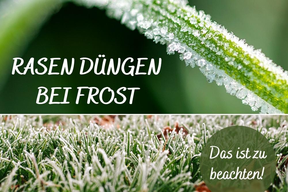 Rasen düngen bei Frost