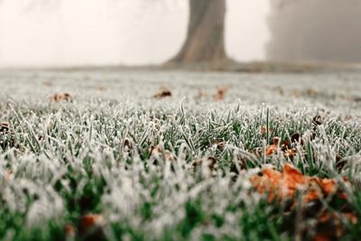 Rasen Frost
