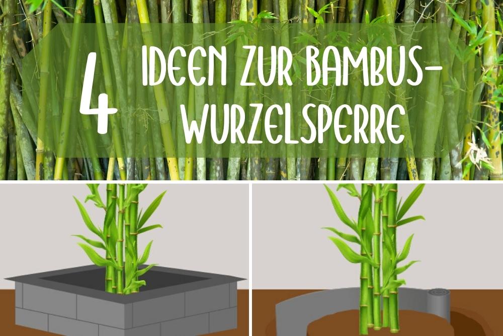 Bambuswurzelsperre