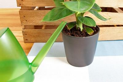 Pflanze gießen