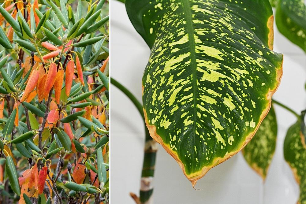 Pflanzen braune Spitzen