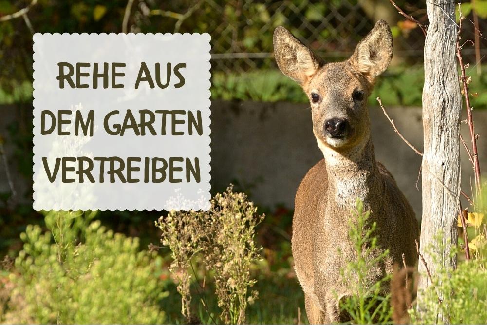 Rehe aus Garten vertreiben