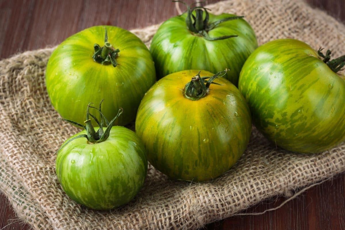 grüne Tomaten reifen nach
