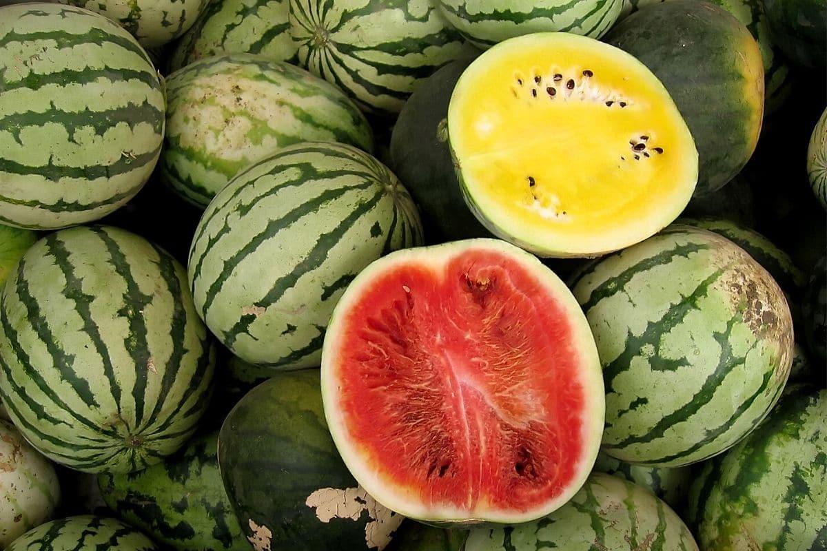 Wassermelonen, gelb und rot