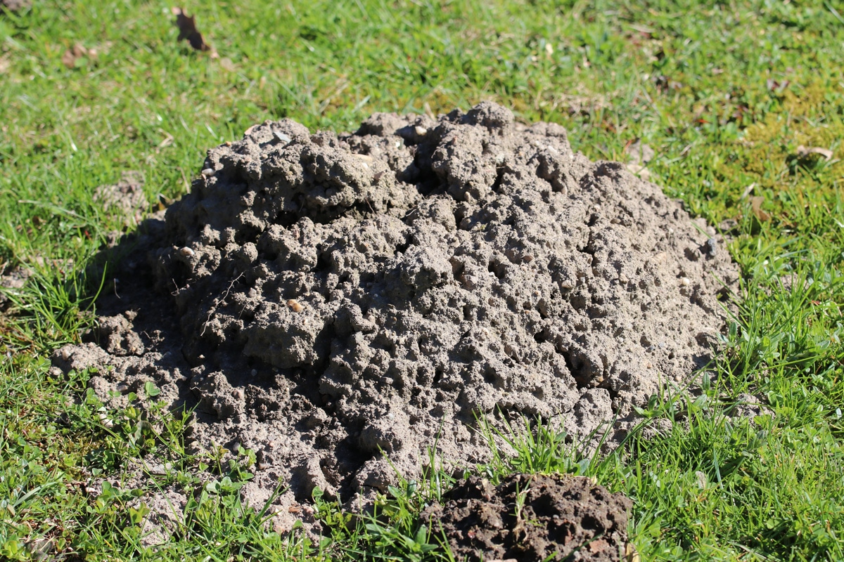Große Löcher im Garten - Maulwurfloch