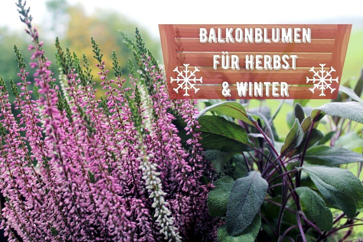 Balkonblumen für Herbst und Winter