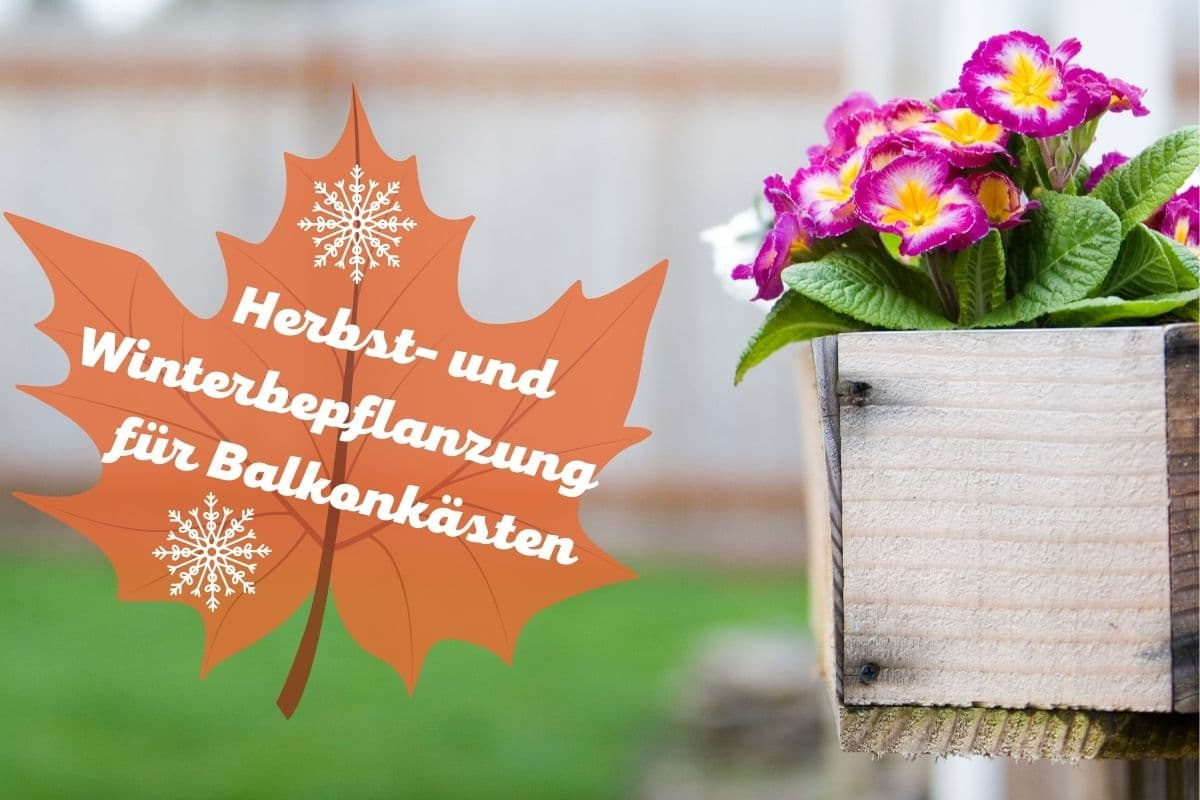 Blumenkasten im Herbst und Winter bepflanzen