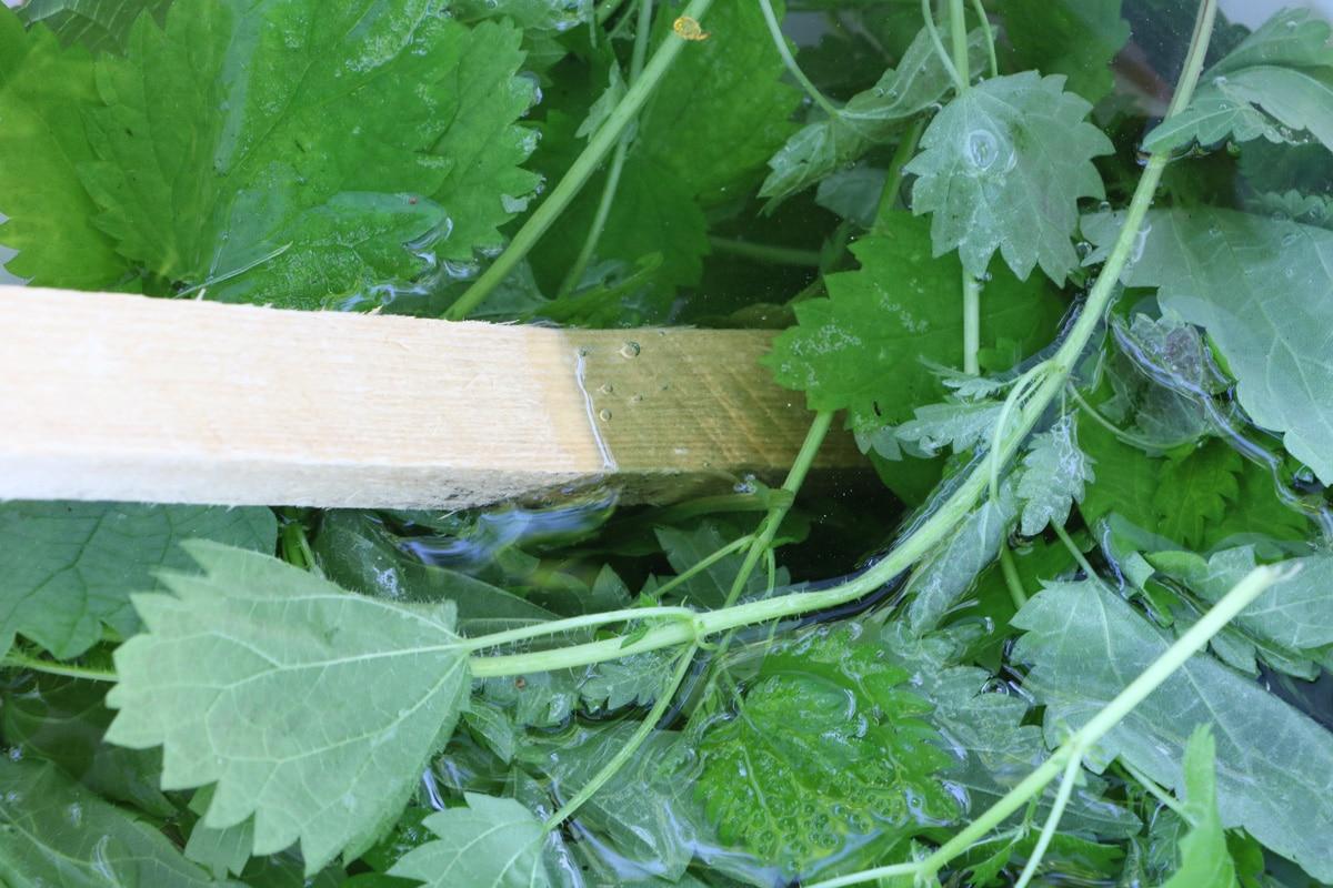 Brennesseljauche schimmelt - Umrühren mit Holzstab