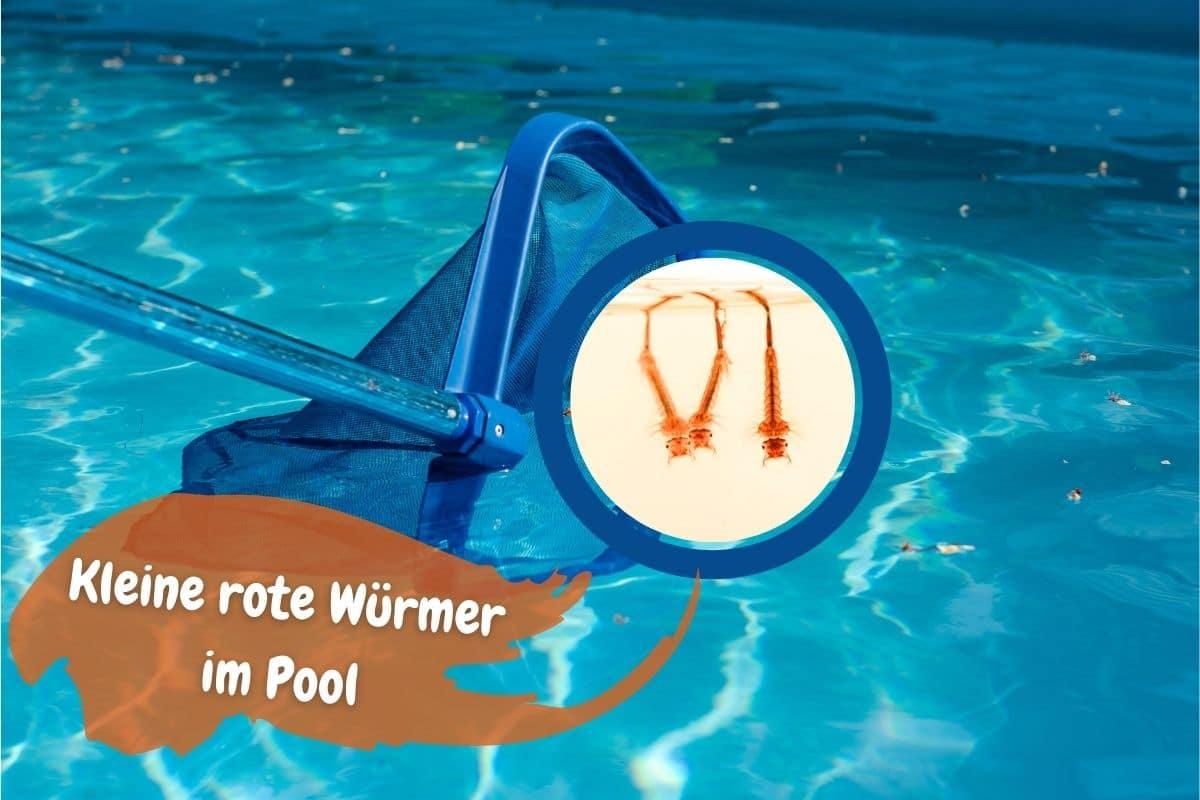 Kleine rote Würmer im Pool