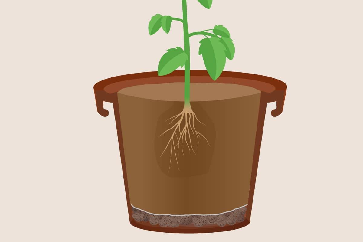 Pflanze in Kübel pflanzen