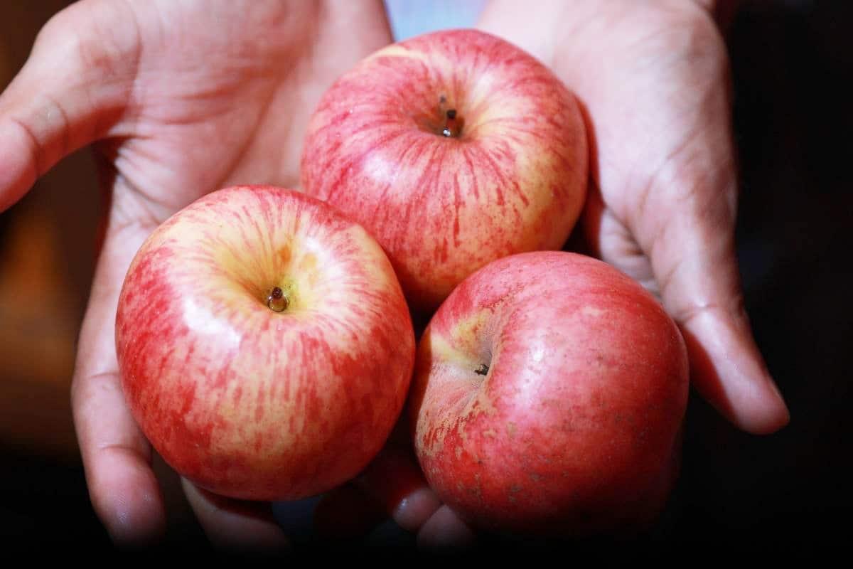Reifen Chilis nach - Reife Äpfel