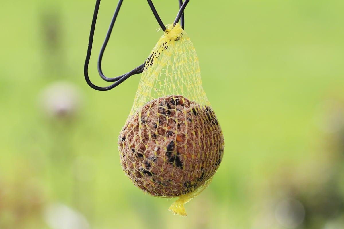 Erdnüsse als Vogelfutter - Meisenknödel
