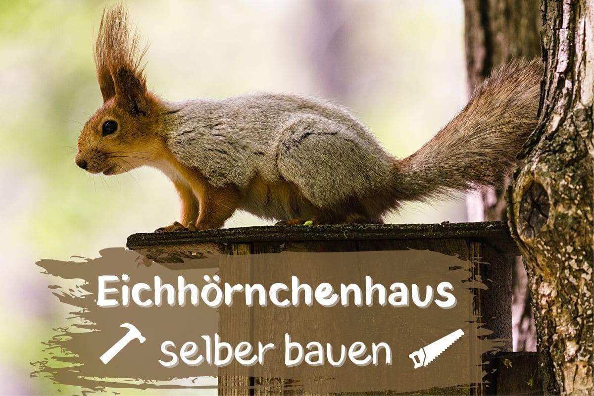 Eichhörnchenhaus selber bauen