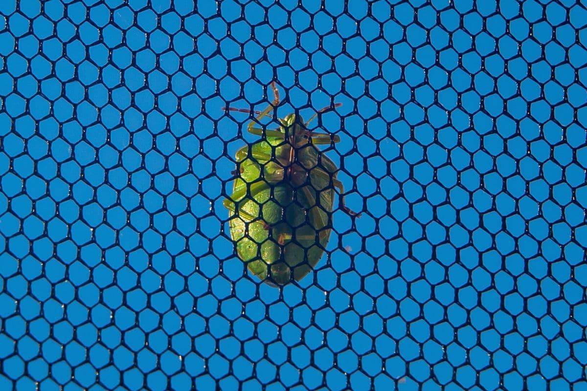 Wanze an Insektengitter