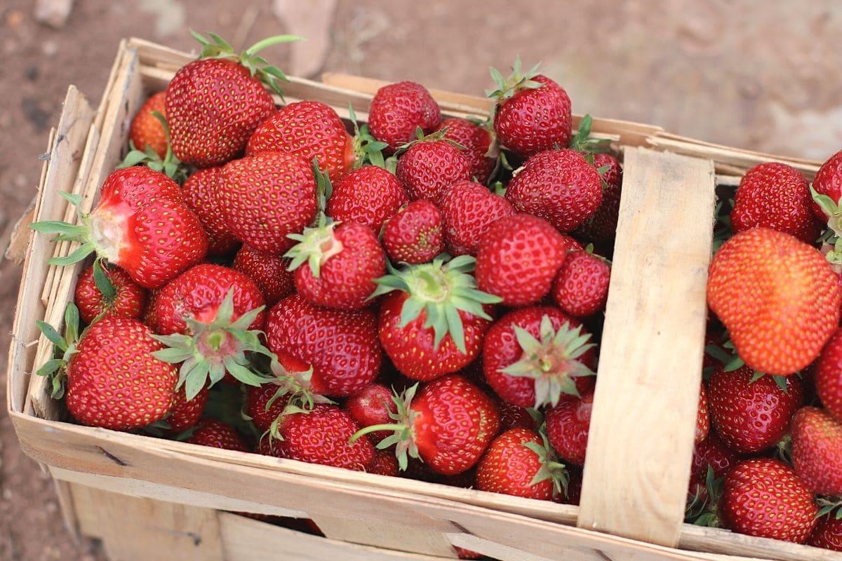 Körbchen voller Erdbeeren