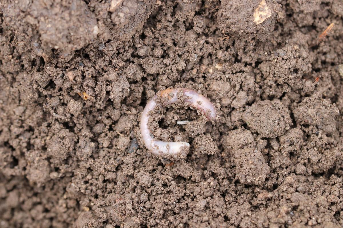 Erdaushub entsorgen - Mutterboden