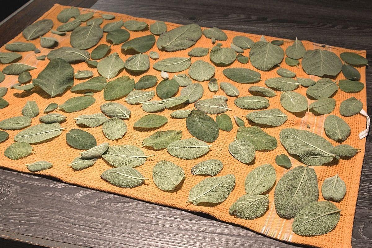 Salbei einfrieren - Blätter trocknen