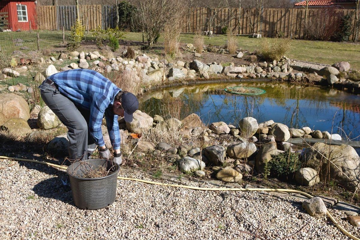 Wie überwintern Frösche - Teichpflege im Herbst